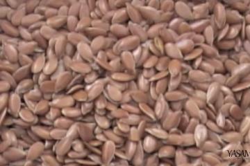 keten tohumu kürü zayıflama