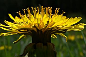 bitkiler faydaları