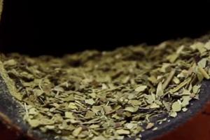 bitki çayı Paraguay çayı bitki çayı faydaları Bitki Çaylarının Faydaları Kısaca Nedir? yerba mate faydalar