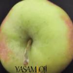 elma zayıflatırmı kalorisi elma kalori Kırmızı ve Yeşil Elma Kalorisi Kilo Aldırır mı Diyette? elma kalori