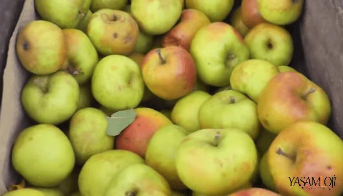 elma kilo aldırırmı