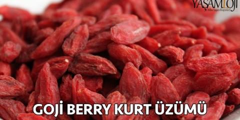 goji berry kurt üzümü nedir